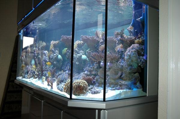 panorama aquarium kaufen fy92 hitoiro. Black Bedroom Furniture Sets. Home Design Ideas