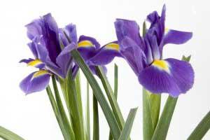 gartenpflanzen-billig